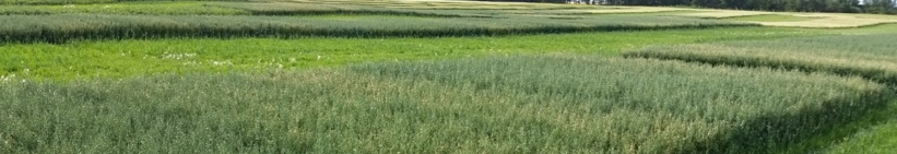 Oat seed size trial