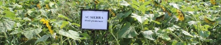 AC Sierra