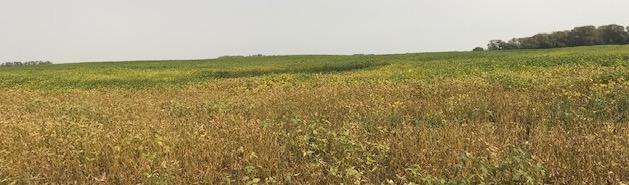 Fusarium Roor Rot Soybean